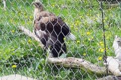 Śląskie-Zoo-5
