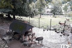 Steinwasenpark-36