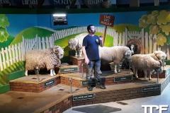 The-Big-Sheep-18