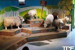 The-Big-Sheep-19