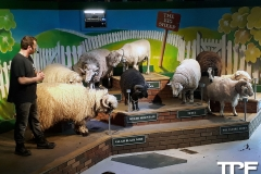 The-Big-Sheep-20