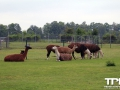 Tierpark-Nadermann-16-05-2014-(12)