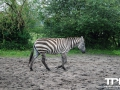 Tierpark-Nadermann-16-05-2014-(20)