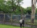 Tierpark-Nadermann-16-05-2014-(21)