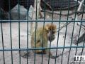 Tierpark-Nadermann-16-05-2014-(23)