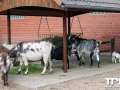 Tierpark-Nadermann-16-05-2014-(42)