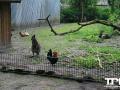 Tierpark-Nadermann-16-05-2014-(5)