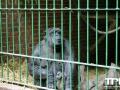 Tierpark-Nadermann-16-05-2014-(57)