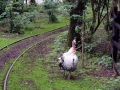 Tierpark-Nadermann-16-05-2014-(59)