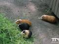 Tierpark-Nadermann-16-05-2014-(64)