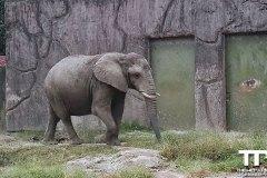 Tobu-Zoo-40