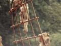 1973-zoo-wassenaar-3_6130070323_o