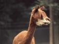 1973-zoo-wassenaar-4_6130622064_o