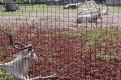 Zoo-Amiens-(16)