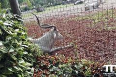 Zoo-Amiens-(17)