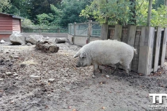 Zoo-Amiens-(20)