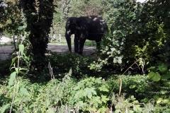 Zoo-Amiens-(26)