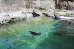 Zoo-Amiens-(3)