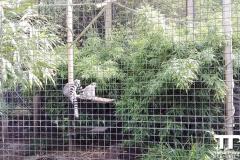 Zoo-Amiens-(32)