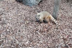 Zoo-Amiens-(33)