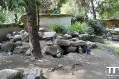 Zoo-Amiens-(35)