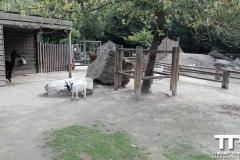 Zoo-Amiens-(39)