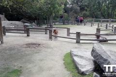 Zoo-Amiens-(40)
