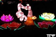 China-Light--(18)