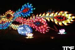 China-Light--(66)