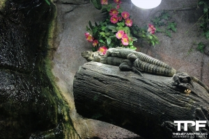 Zoo Serpentarium - augustus 2019